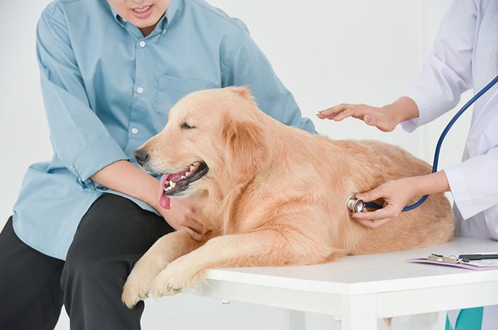 Auto7 Tips Merawat Kesehatan Anjing yang Perlu Anda Perhatikan