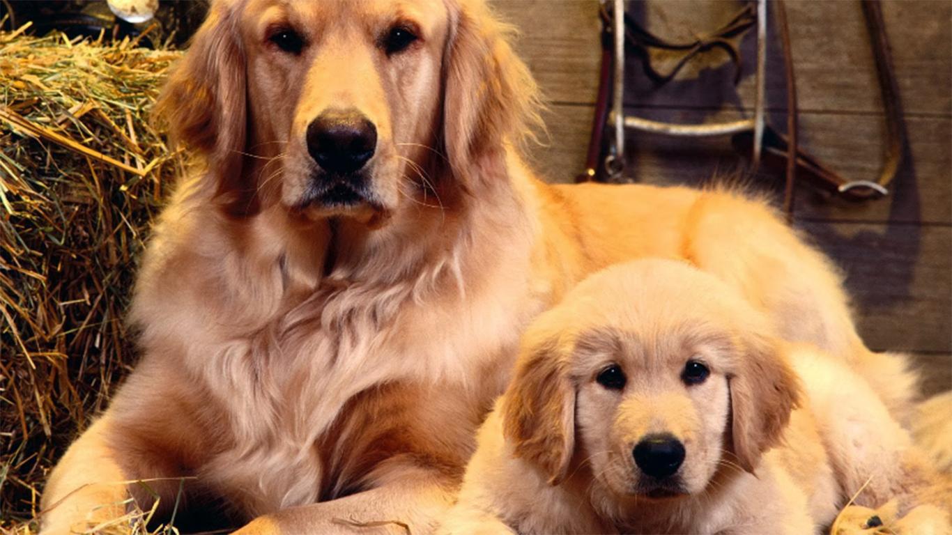 Tips Mudah Memelihara Kesehatan Anjing Agar Terhindar dari Stress