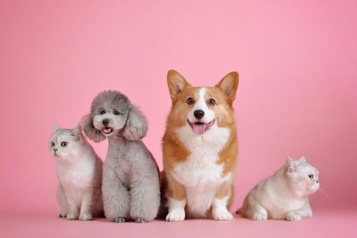 Tips Untuk Pemula: Pahami 5 Kebutuhan Dasar Anjing Peliharaan