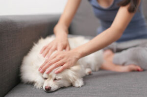 Tips Perawatan Kesehatan Rutin Untuk Anjing