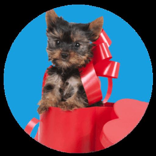 Anypup.com – Perawatan dan Kesehatan Anjing Peliharaan